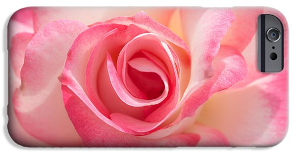 Pink Roses iPhone Cases - Pink Cotton Candy Rose iPhone Case by Ana V  Ramirez