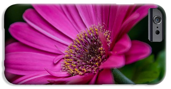 Close Up Pyrography iPhone Cases - Pink Daisy iPhone Case by Olga Photography