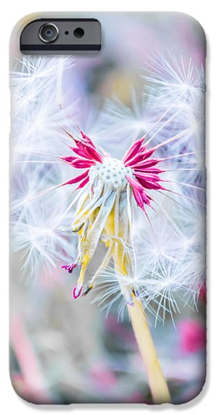 Floral Art iPhone Cases - Pink Dandelion iPhone Case by Parker Cunningham