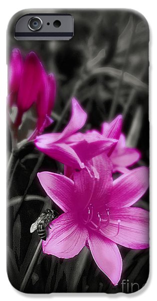 Day Lilies iPhone Cases - Pink Day Lily iPhone Case by Mindy Sommers