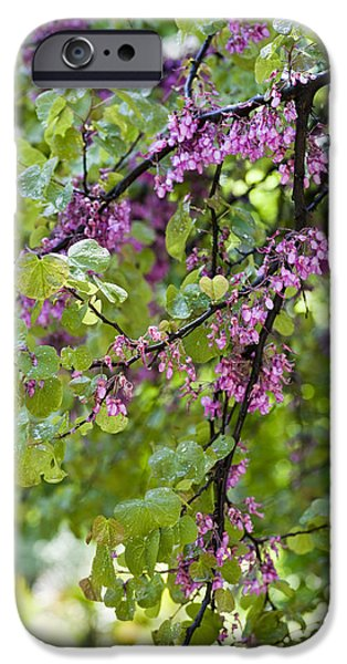 Relationship iPhone Cases - Pink flowers of the Love Tree iPhone Case by Frank Tschakert