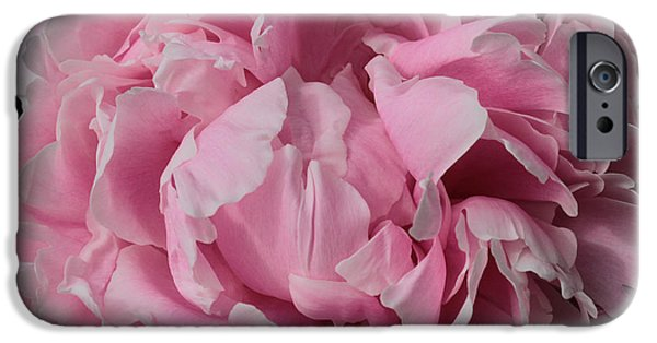 Botanical Photographs iPhone Cases - Pink Gem  iPhone Case by Connie Handscomb
