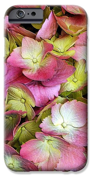 Struckle iPhone Cases - Pink Hydrangea iPhone Case by Kathleen Struckle