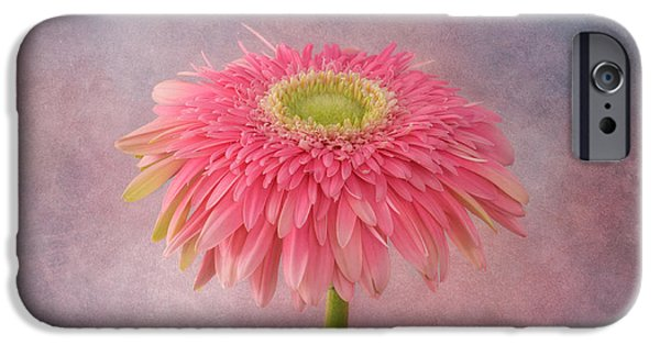Innocence iPhone Cases - Pink in the Garden iPhone Case by Kim Hojnacki