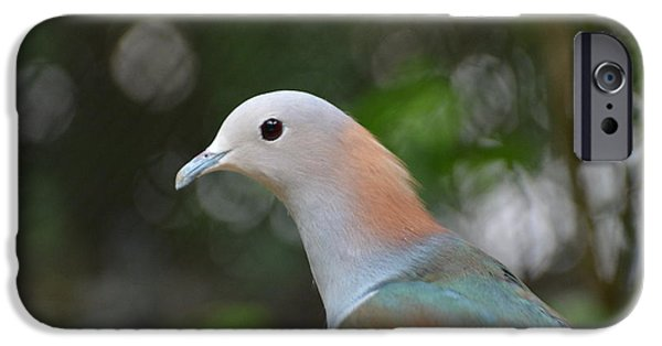 Mangrove Forest iPhone Cases - Pink-necked Green Pigeon 1 iPhone Case by Don Columbus