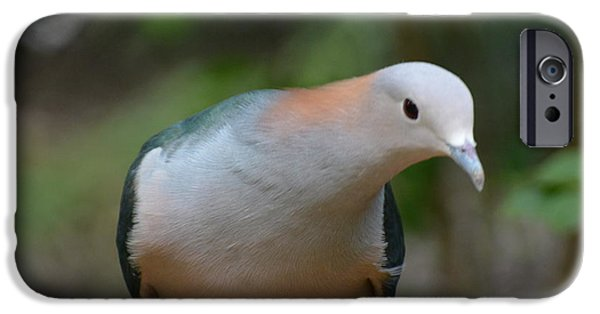 Mangrove Forest iPhone Cases - Pink-necked Green Pigeon 2 iPhone Case by Don Columbus
