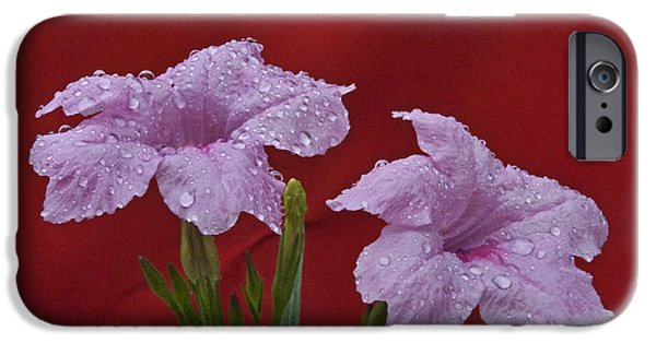 Birds iPhone Cases - Pink On Red iPhone Case by Skip Willits