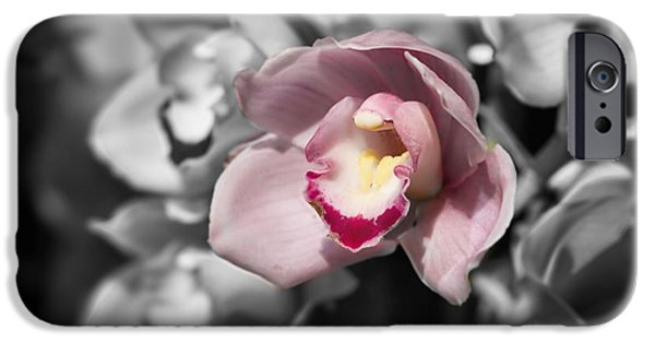 Graphic Design iPhone Cases - Pink Orchid Selective Color iPhone Case by Terry Weaver