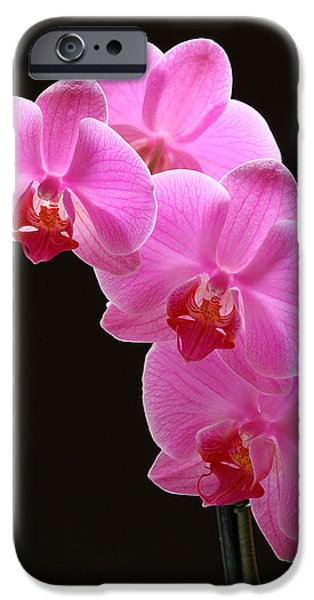 Nature Divine iPhone Cases - Pink Orchids iPhone Case by Juergen Roth