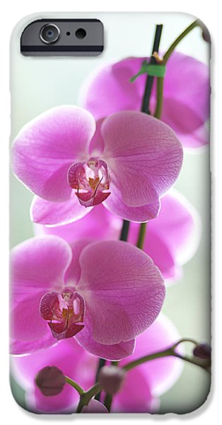 Printscapes - iPhone Cases - Pink Orchids iPhone Case by Kicka Witte - Printscapes