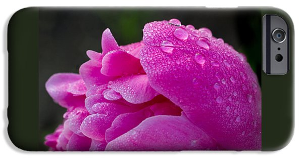 Raining iPhone Cases - Pink Peony iPhone Case by Penny Meyers