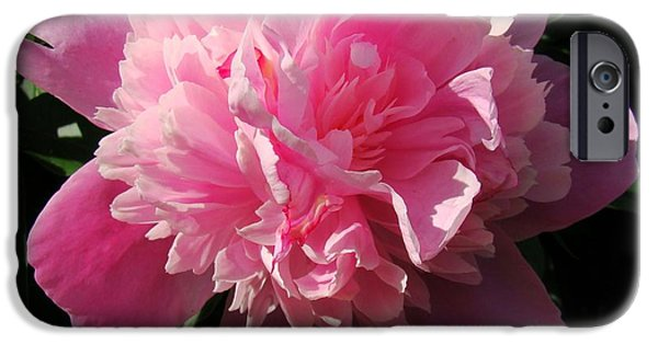 Sunlight On Flowers iPhone Cases - Pink Peony iPhone Case by Sandy Keeton