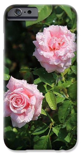 Botanical Photographs iPhone Cases - Pink Rose 3 iPhone Case by Karen Silvestri