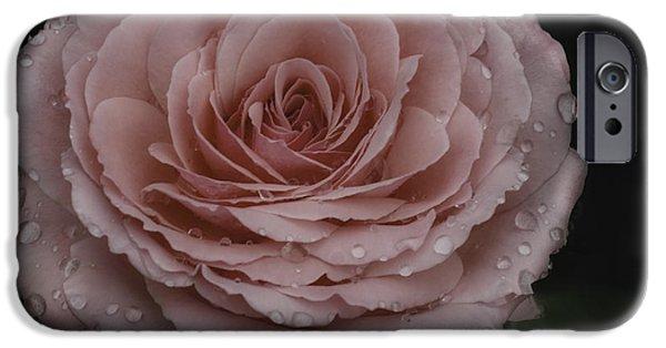Raining iPhone Cases - Pink Rose iPhone Case by Eleanor  Bortnick