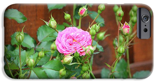 Innocence iPhone Cases - Pink Rose With Buds iPhone Case by Cynthia Guinn