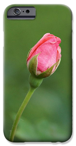 Indiana Flowers iPhone Cases - Pink Rosebud iPhone Case by Sandy Keeton