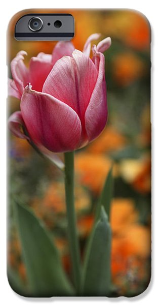 Arkansas iPhone Cases - Pink Tulip iPhone Case by Tony  Colvin