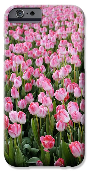 Denmark iPhone Cases - Pink Tulips- photograph iPhone Case by Linda Woods