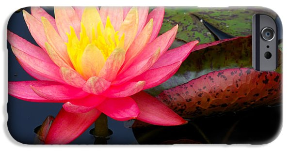 Close Up Pyrography iPhone Cases - Pink Water Lily Flower iPhone Case by Nancy Mueller