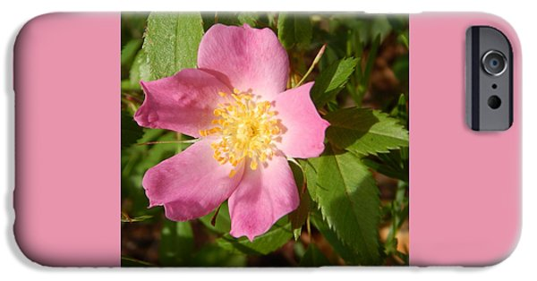 Arkansas iPhone Cases - Pink Wild Rose 1 iPhone Case by Jefferson Danley