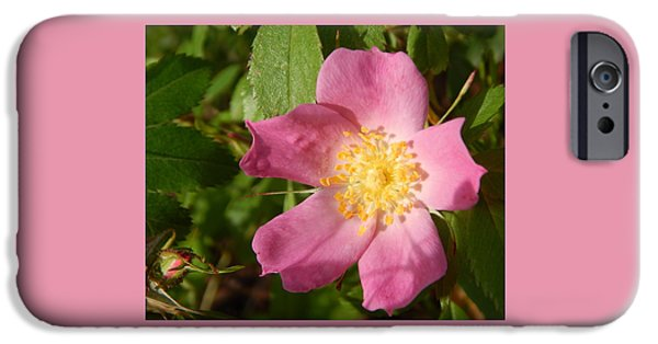 Arkansas iPhone Cases - Pink Wild Rose 2 iPhone Case by Jefferson Danley