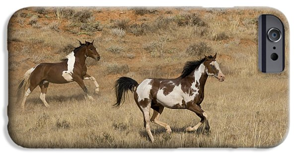 Overo iPhone Cases - Pinto Horses iPhone Case by Jean-Louis Klein & Marie-Luce Hubert