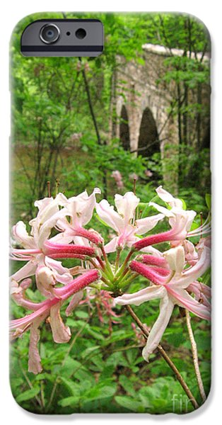 Fieldstone iPhone Cases - Pinxterbloom Azalea at Bowmans Hill iPhone Case by Anna Lisa Yoder