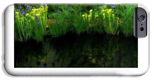 Reflection In Pitcher iPhone Cases - Pitcher Plant Garden poster iPhone Case by Mike Nellums