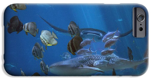 Nature Study iPhone Cases - Placid Kingdom  iPhone Case by Betsy C  Knapp