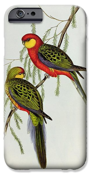 Lovebird iPhone Cases - Platycercus Icterotis iPhone Case by John Gould