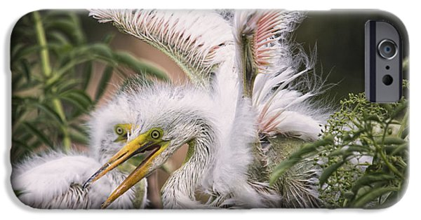 Baby Bird iPhone Cases - Playful Egret Chicks iPhone Case by Mary Lou Chmura