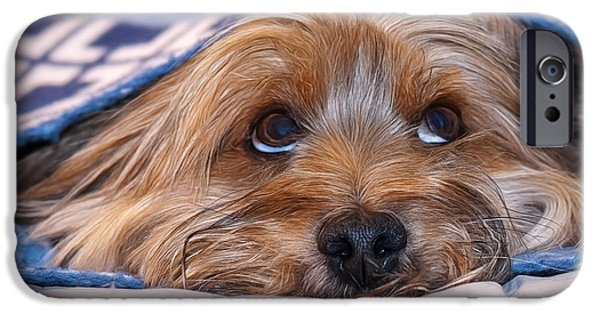Puppies iPhone Cases - Please Forgive Me iPhone Case by Maria Coulson