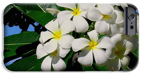 Floral Photographs iPhone Cases - Plumeria Cluster iPhone Case by James Temple