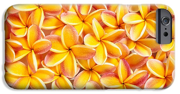 Bed Spread iPhone Cases - Plumeria Flowers iPhone Case by Kyle Rothenborg - Printscapes