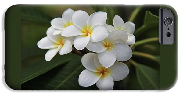White Flowers iPhone Cases - Plumeria - Golden Hearts iPhone Case by Kerri Ligatich