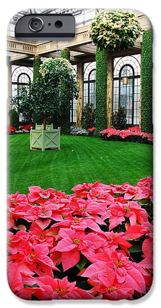 Wintertime iPhone Cases - Poinsettias  iPhone Case by James Kirkikis