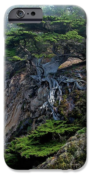 California iPhone Cases - Point Lobos Veteran Cypress Tree iPhone Case by Charlene Mitchell