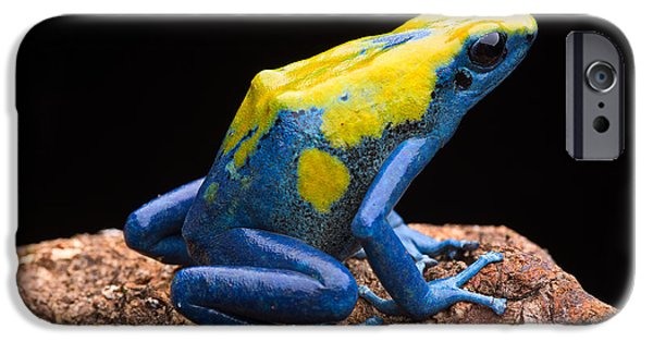 Frogs Photographs iPhone Cases - poison arrow frog Amazon jungle iPhone Case by Dirk Ercken