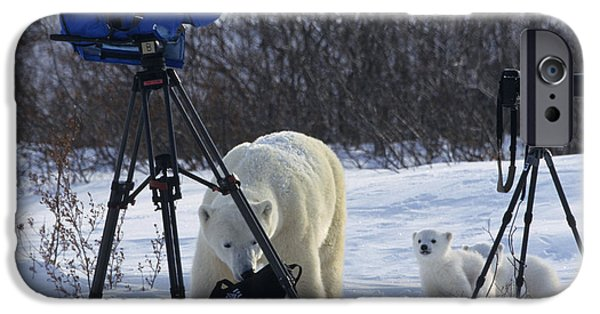 Born Adult iPhone Cases - Polar Bear And Cubs With Cameras iPhone Case by Jean-Louis Klein & Marie-Luce Hubert