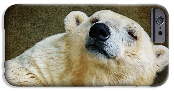Bear iPhone Cases - Polar Bear iPhone Case by Angela Doelling AD DESIGN Photo and PhotoArt