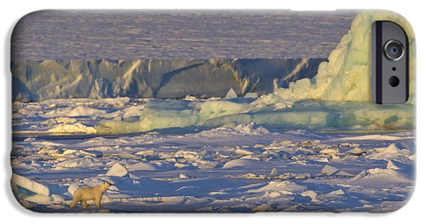 Norwegian Sunset iPhone Cases - Polar Bear At Sunset iPhone Case by Jean-Louis Klein & Marie-Luce Hubert