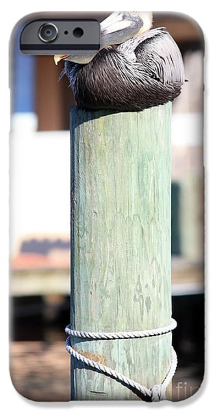 Florida Wildlife iPhone Cases - Pole Top Pelican iPhone Case by Carol Groenen
