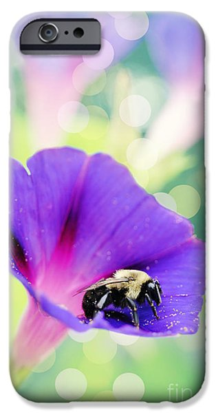 Business Photographs iPhone Cases - Pollinating the Glories iPhone Case by Kelly Nowak