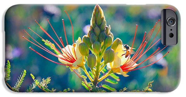 Fauna iPhone Cases - Pollination iPhone Case by Ram Vasudev