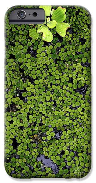 Aquatic Plants iPhone Cases - Pond Plants . 7D5701 iPhone Case by Wingsdomain Art and Photography
