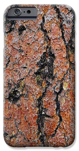 Prescott iPhone Cases - Ponderosa Pine Bark iPhone Case by Muriel Levison Goodwin