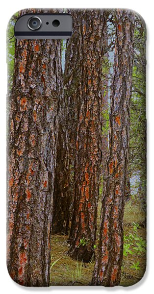 Prescott iPhone Cases - Ponderosa Pines iPhone Case by Muriel Levison Goodwin