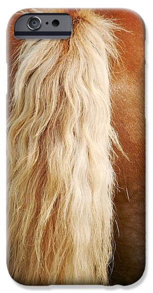 Close Up Glass iPhone Cases - Pony Tail iPhone Case by Donna Shahan