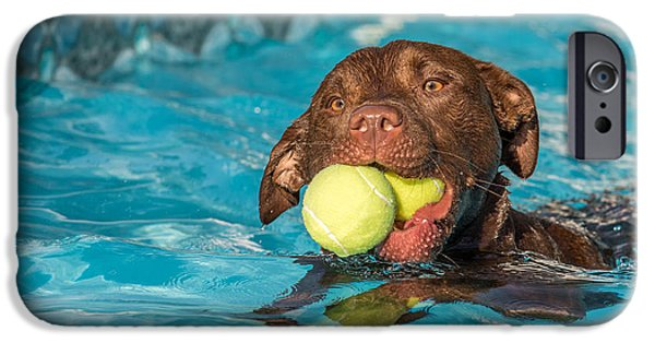 Chocolate Lab iPhone Cases - Pool Time iPhone Case by Eleanor Abramson