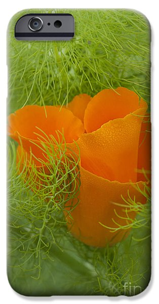 July iPhone Cases - Poppy and Fennel iPhone Case by Robert Potts